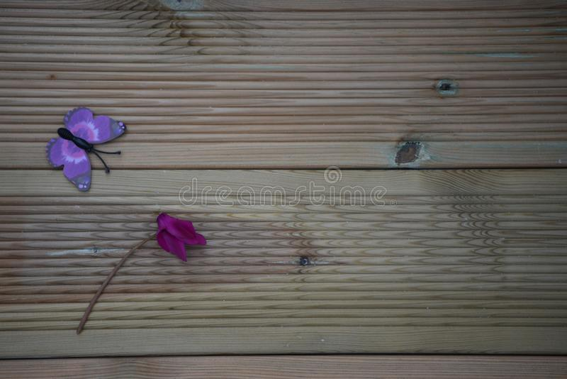 Vinterfotografibilden av rosa purpurfärgad cyklamen blommar och den roliga leksakfjärilen på lantlig wood bakgrund och utrymme royaltyfri foto