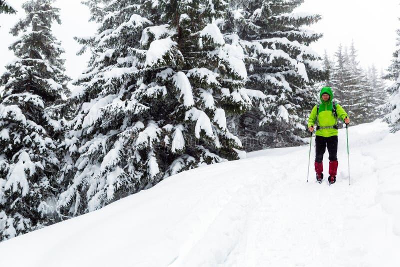 Vinterfotvandraren i vita snöig trän som trekking med att fotvandra, klibbar arkivbild