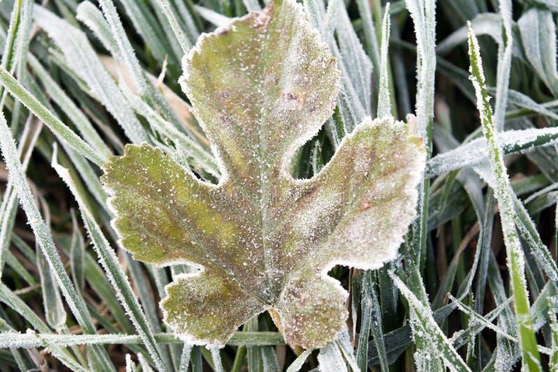 Vinterfrost på bladet royaltyfria foton