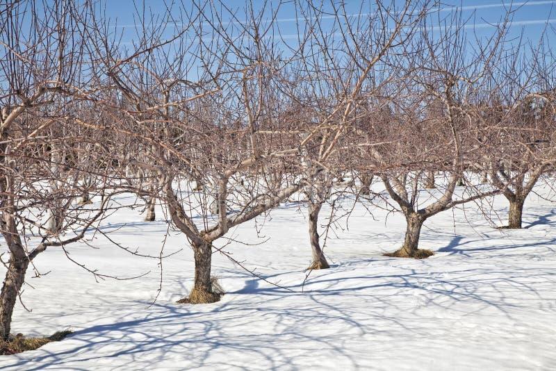Vinterfruktträdgård royaltyfri bild