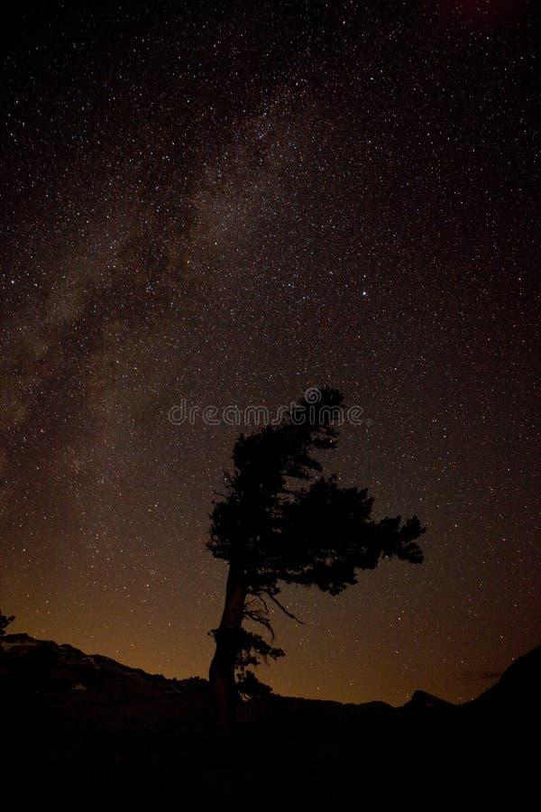 Vintergatan över enslighetvildmarken, Kalifornien fotografering för bildbyråer