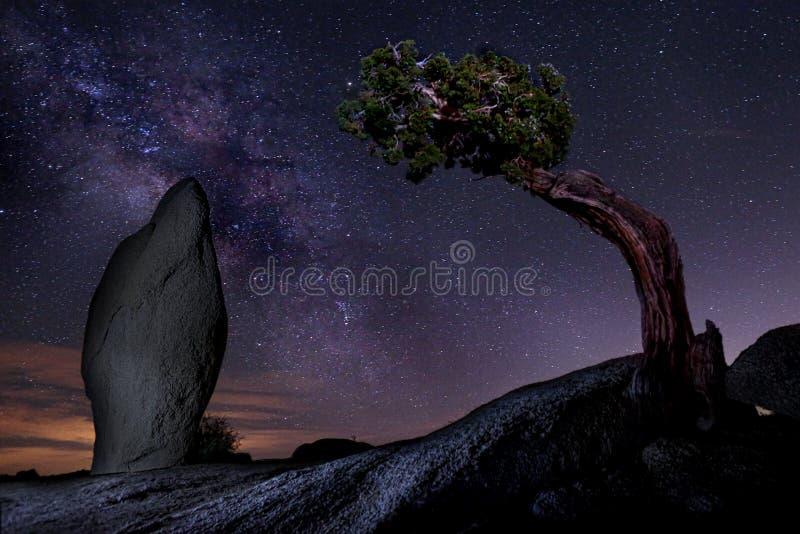 Vintergatan över ett enträd i Joshua Tree National Park USA royaltyfri fotografi