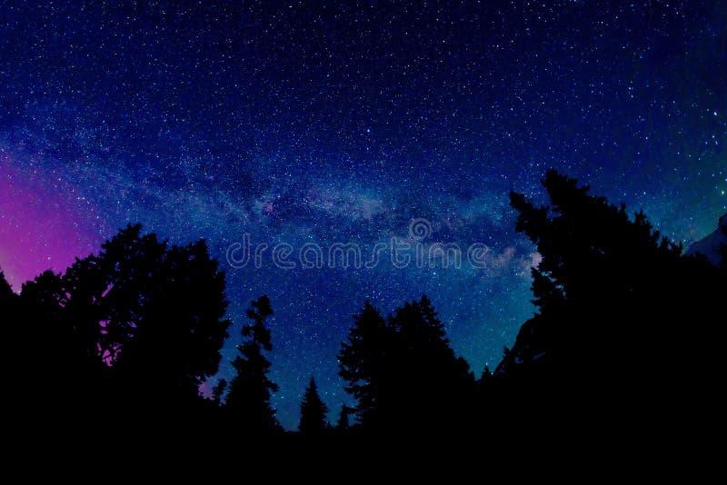 Vintergatan och Aurora Borealis ovanför trädkonturer arkivfoto