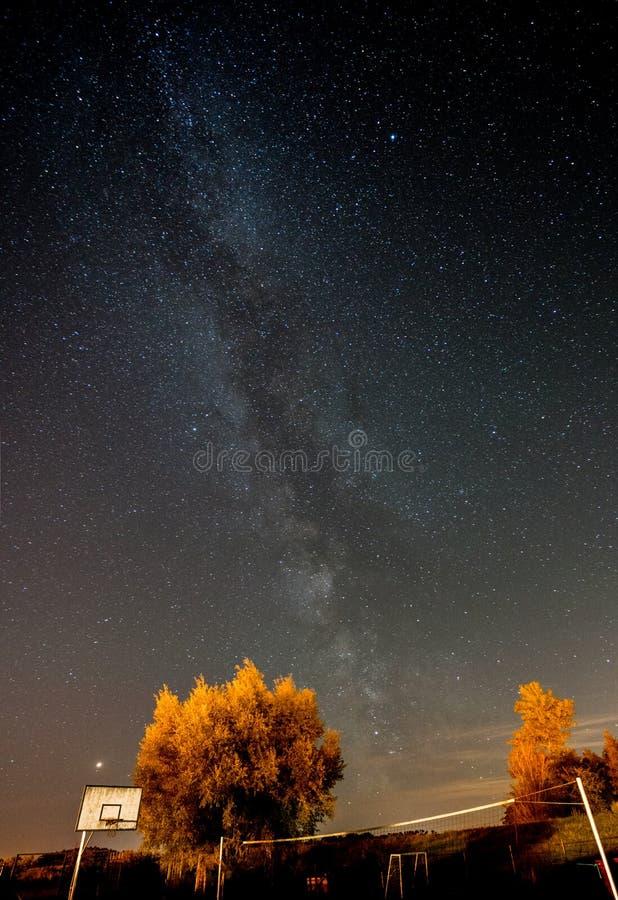 Vintergatan ovanför träden fotografering för bildbyråer