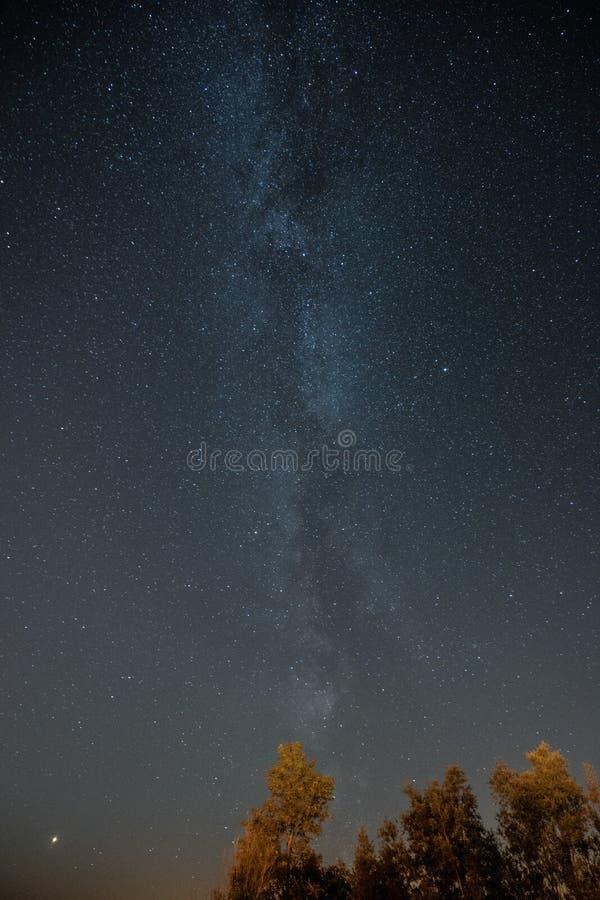 Vintergatan ovanför träden royaltyfri foto