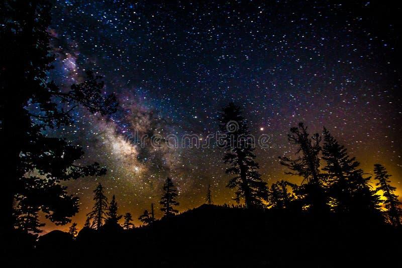 Vintergatangalax med träd royaltyfri foto