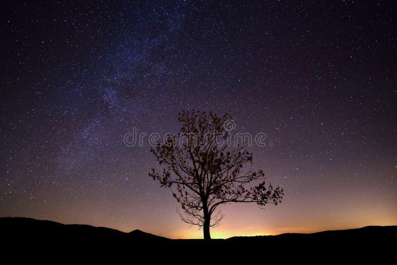 Vintergatanträd mycket av stjärnor arkivbilder
