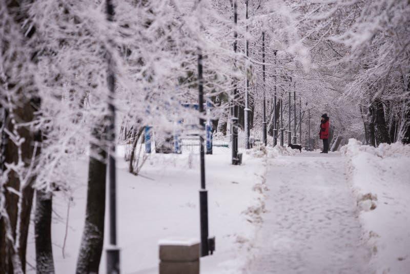 Vintergränden i parkerar på en snöig dag royaltyfri fotografi