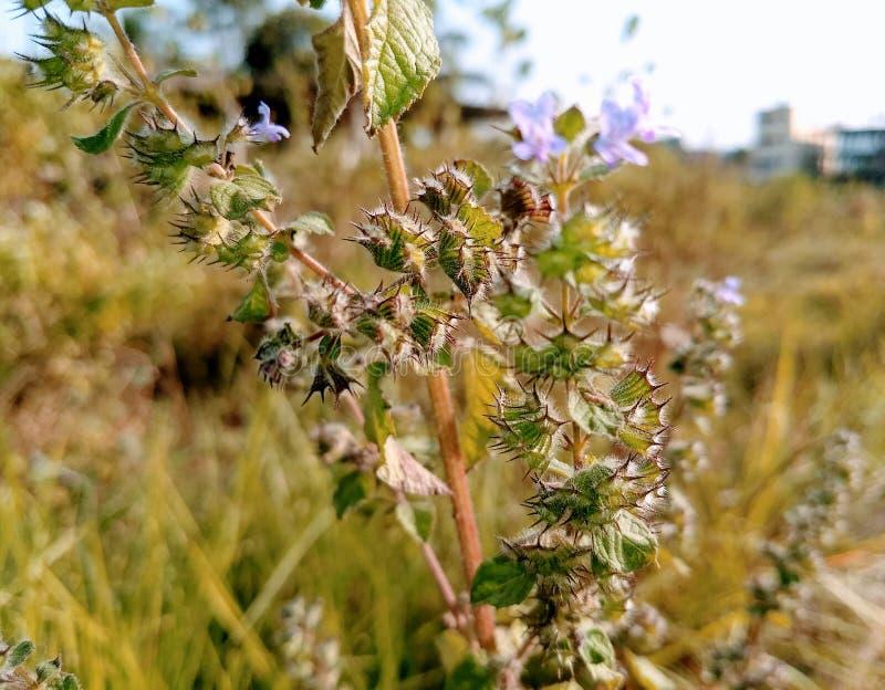 Vintergräs royaltyfri fotografi