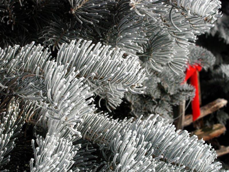 Download Vintergröna lövruskor fotografering för bildbyråer. Bild av evergreen - 46483