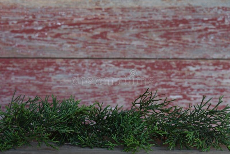 Vintergröna sidor med en röd ladugårdbrädebakgrund royaltyfria bilder