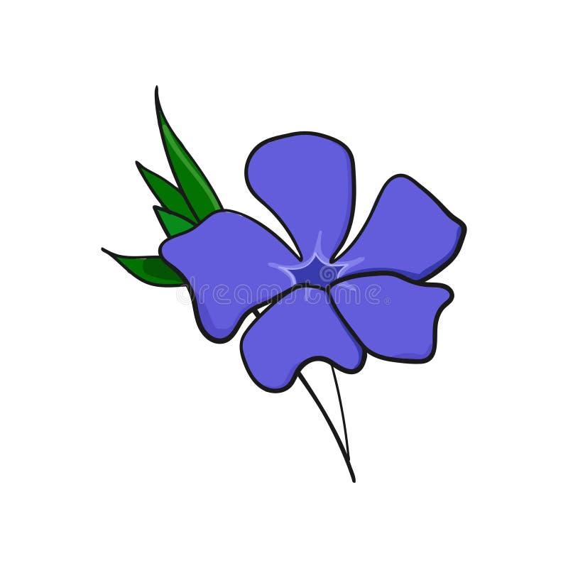 Vintergrönablomma knopp och sidor av vincaen royaltyfri illustrationer