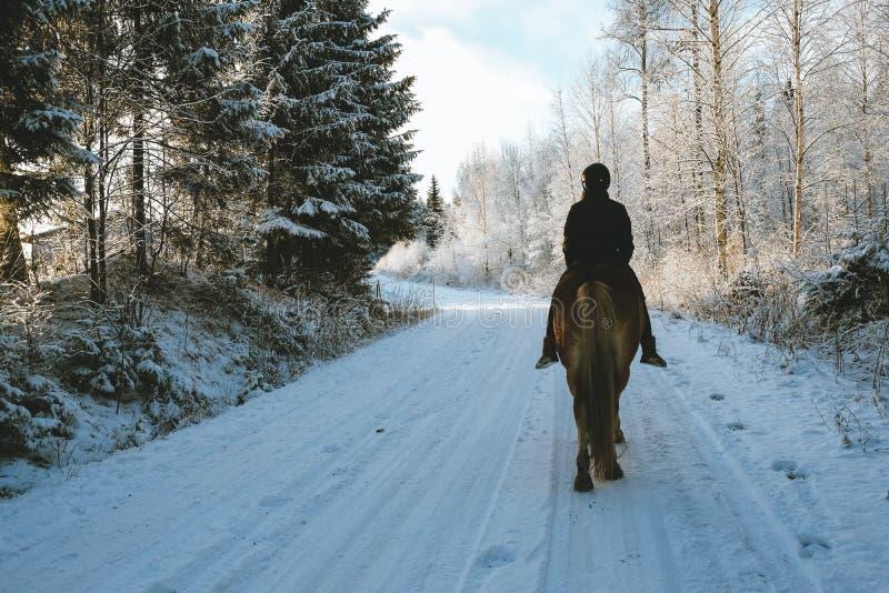 Vinterhästridning arkivbild