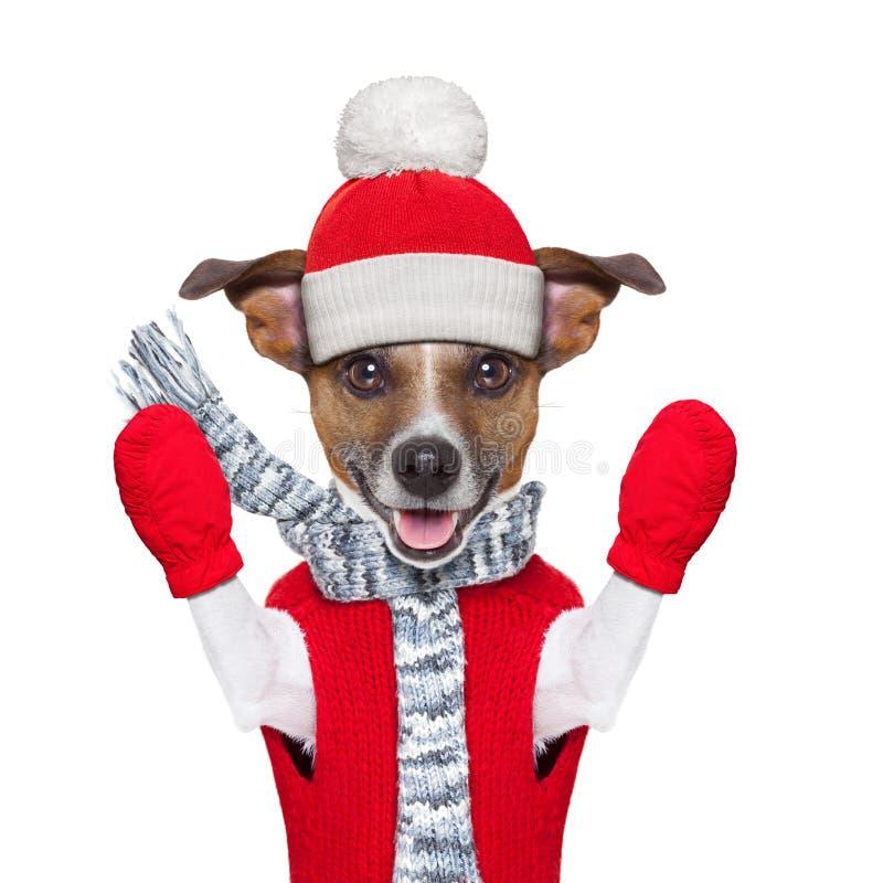 Vinterhund arkivbilder