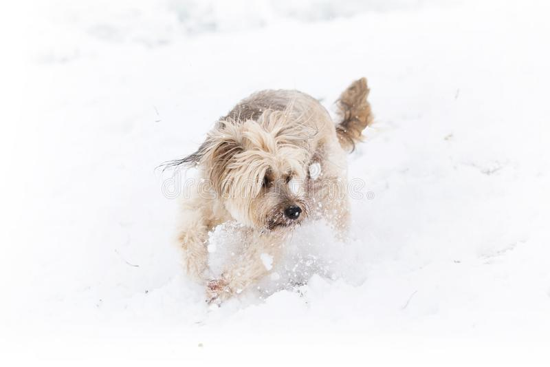 Vinterhund i snön royaltyfri foto