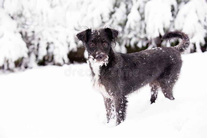 Vinterhund i snön royaltyfri fotografi