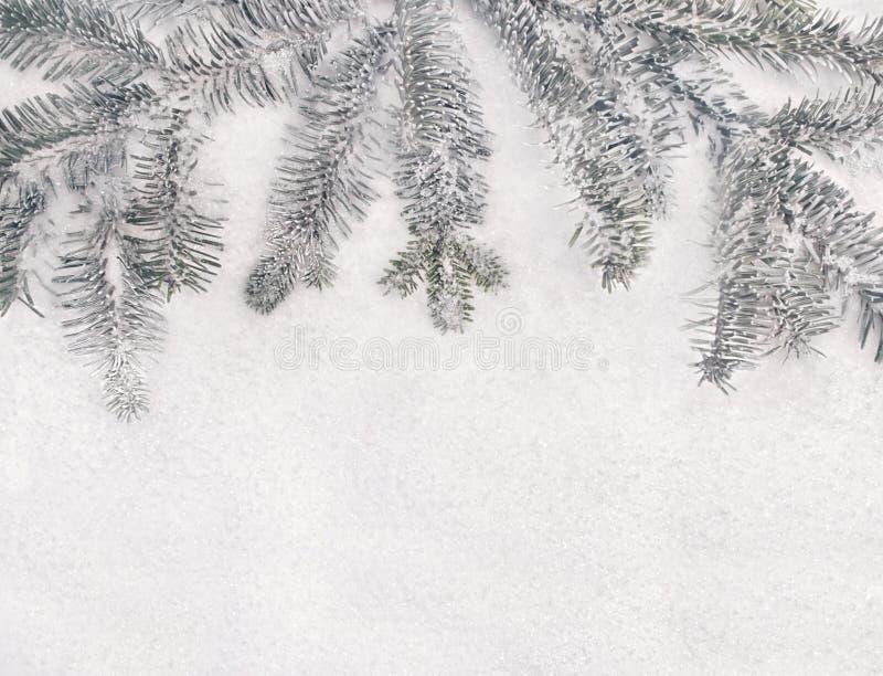 Vinterjulbakgrund - granträdfilialer och snö arkivbilder