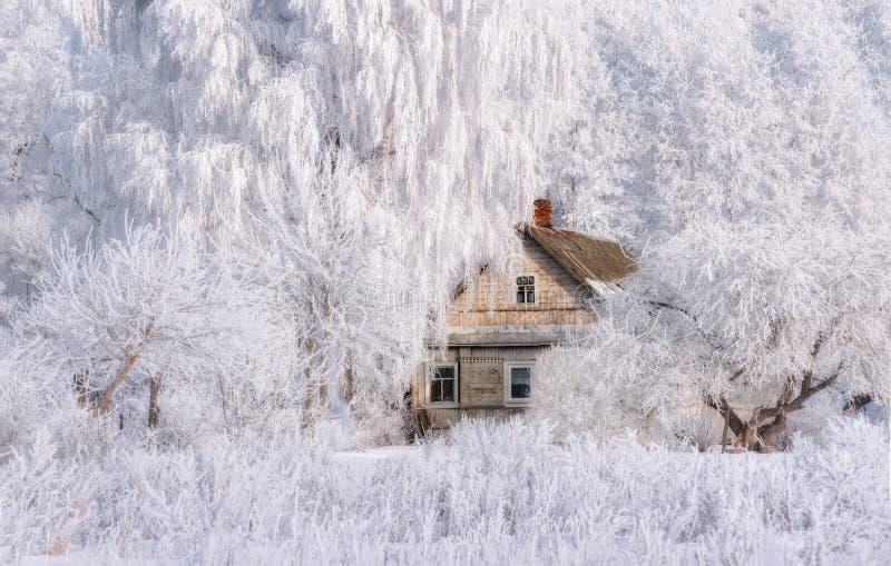 Vinterjullandskap i rosa signaler med det gamla sagahuset som omges av träd i lantligt landskap för rimfrost med sceniskt royaltyfria bilder
