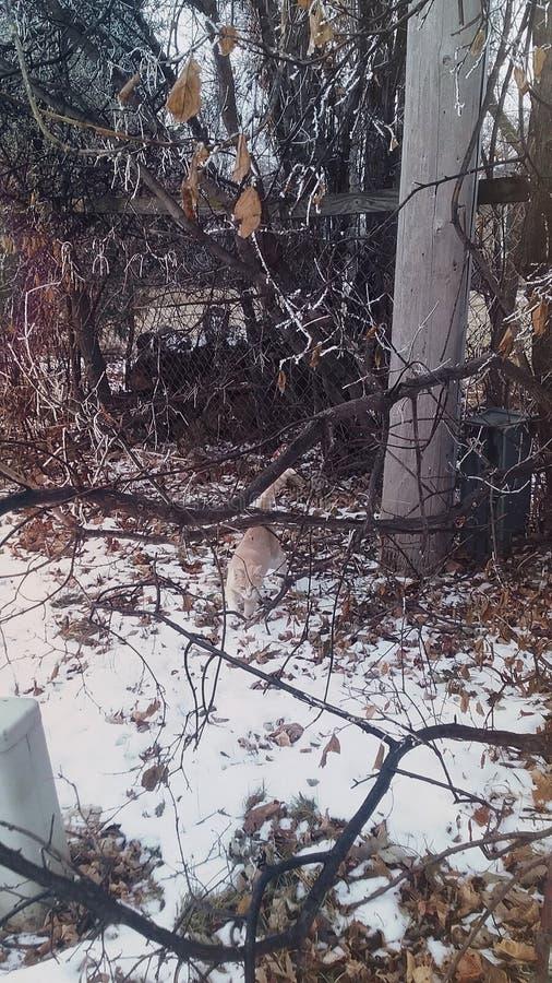 Vinterkatt royaltyfri foto