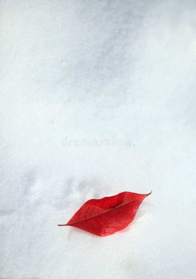 Vinterkyss arkivbild