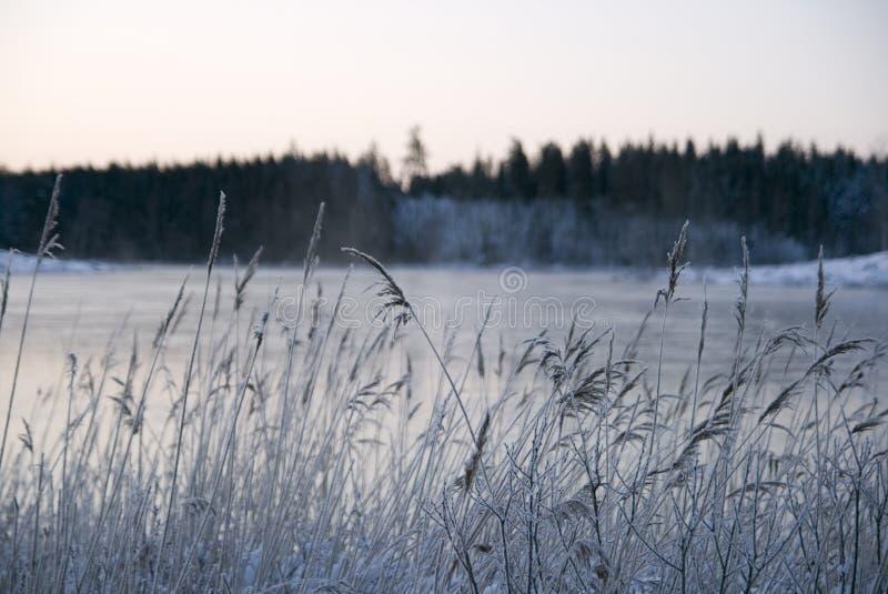 vinterland 2 στοκ φωτογραφίες με δικαίωμα ελεύθερης χρήσης