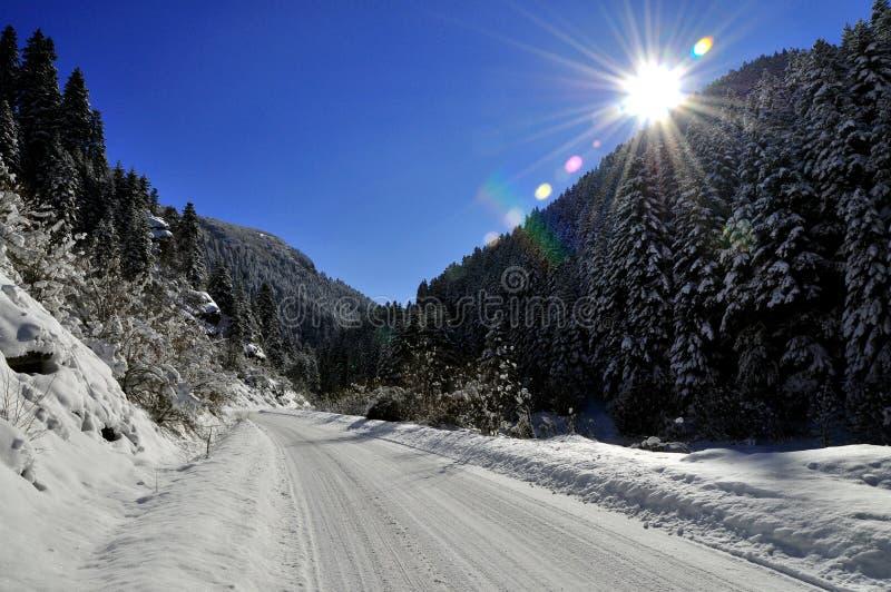 Vinterlandscep royaltyfria bilder