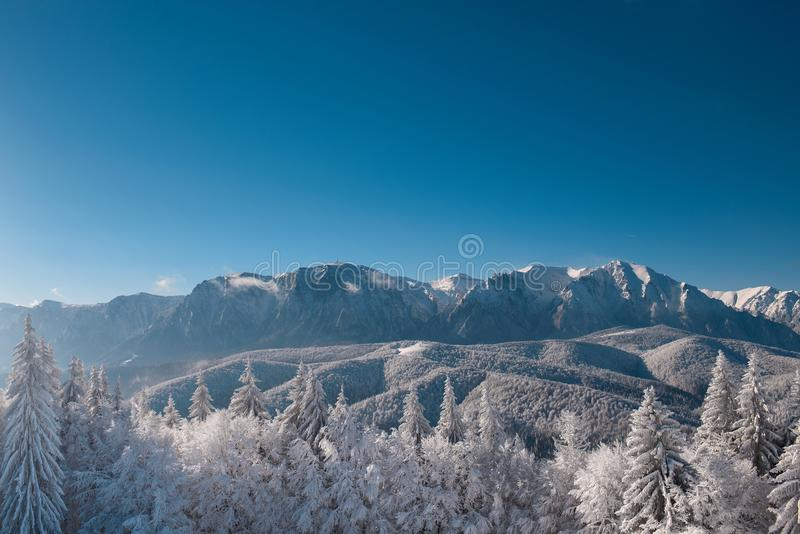 Vinterlandskap av carpathians berg Snöig gran-träd, blått och klar himmel efter soluppgång Rumänien Poiana Brasov arkivfoto