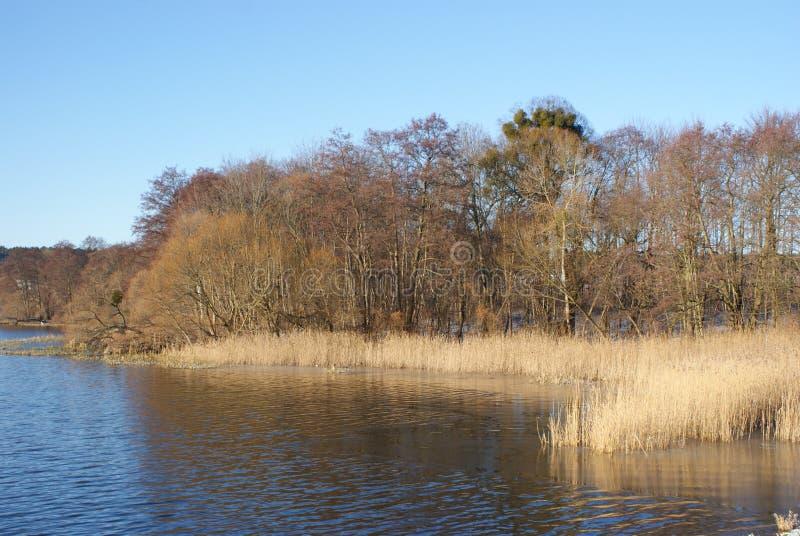 Vinterlandskap av en sjö royaltyfri foto