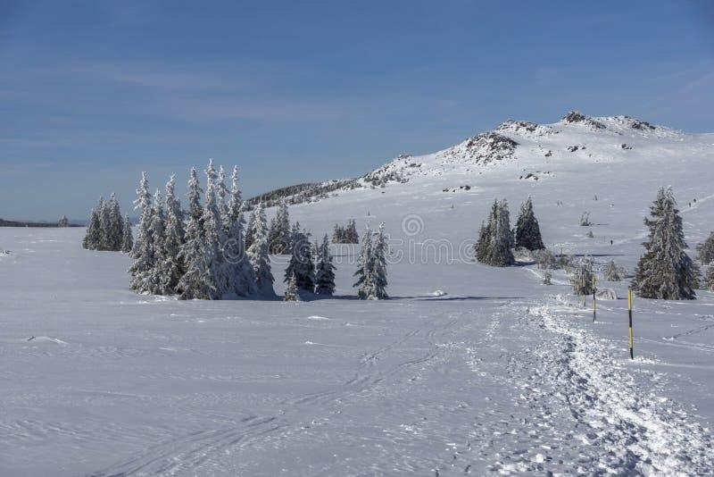 Vinterlandskap av platåPlatoto område på det Vitosha berget, Sofia City Region, Bulgarien fotografering för bildbyråer