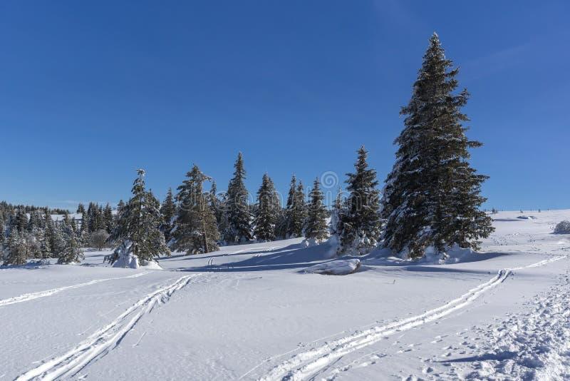 Vinterlandskap av platåPlatoto område på det Vitosha berget, Sofia City Region, Bulgarien royaltyfria foton