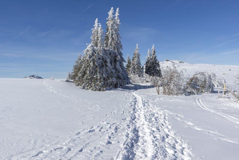 Vinterlandskap av platåPlatoto område på det Vitosha berget, Sofia City Region, Bulgarien royaltyfri foto