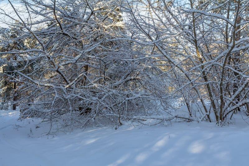 Vinterlandskap efter tungt snöfall royaltyfri bild
