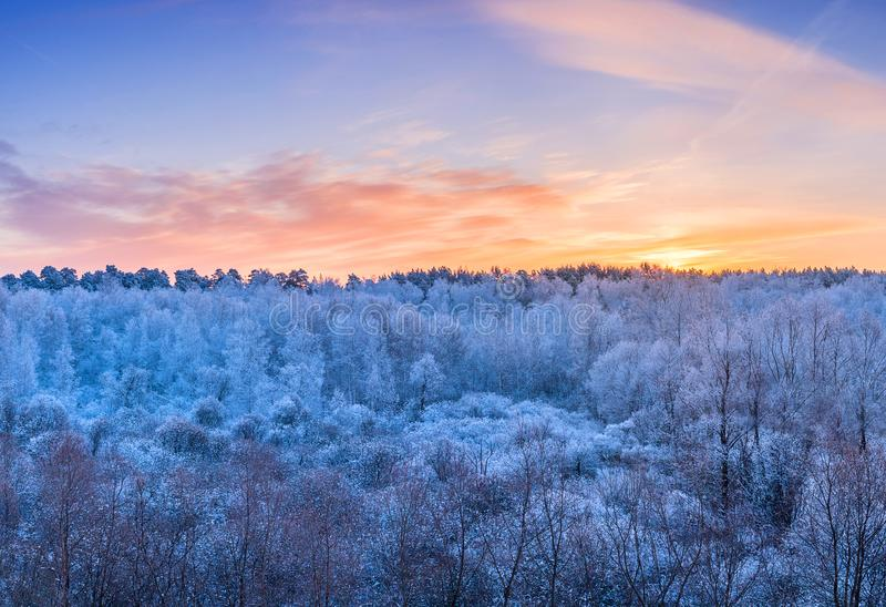 Vinterlandskap - frostiga träd i skogen i den soliga mornien arkivbild