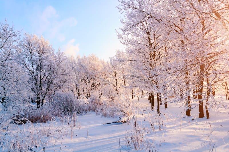 Vinterlandskap - frostiga träd i vinterskog i den soliga morgonen Vinterlandskap med vinterträd royaltyfria foton