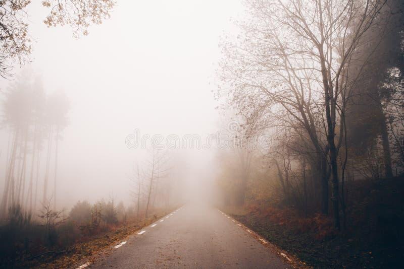 Vinterlandskap i det dimmiga berget royaltyfri fotografi