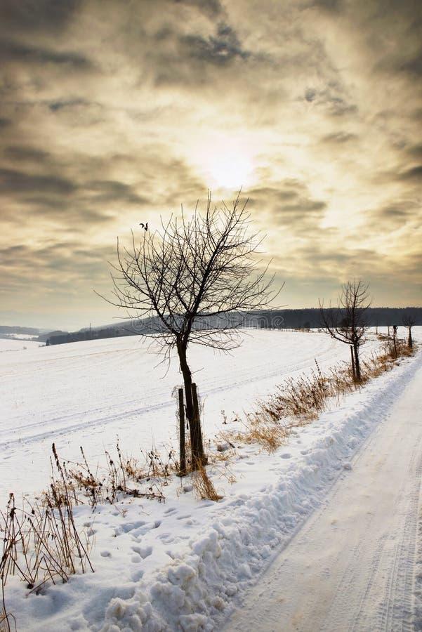 Vinterlandskap i solnedgång royaltyfri bild