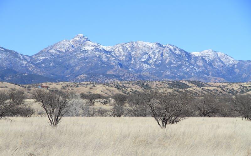 Vinterlandskap i sydliga Arizona - Santa Rita Mountains arkivbild