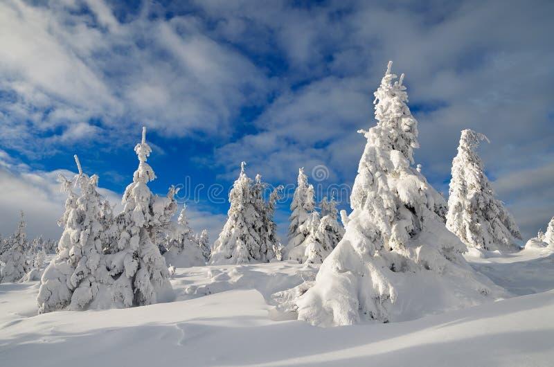 Vinterlandskap med bergskogen royaltyfri foto