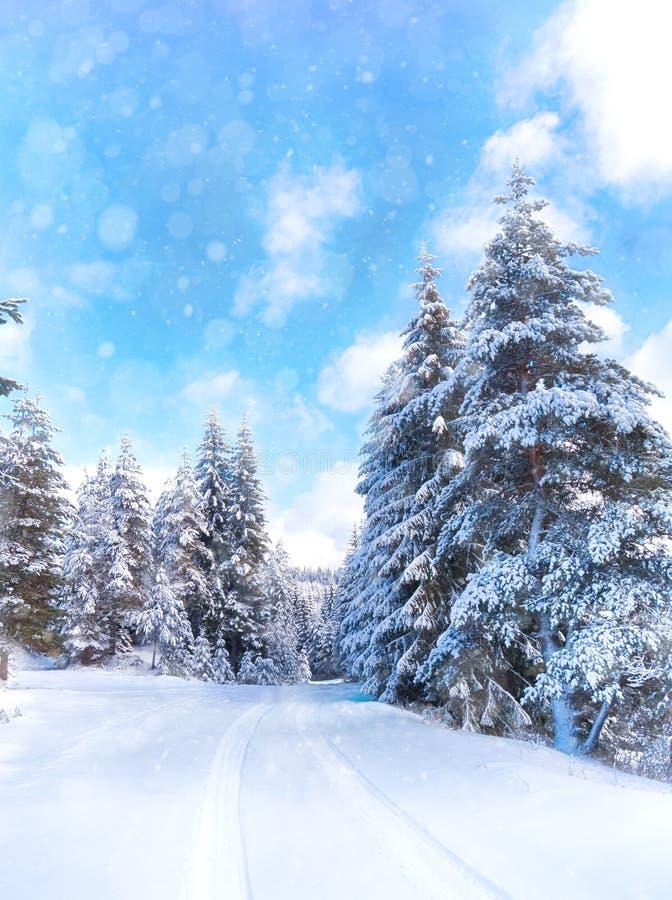 Vinterlandskap med den snöig skogen och vägen Snövärld Rhodope royaltyfria foton