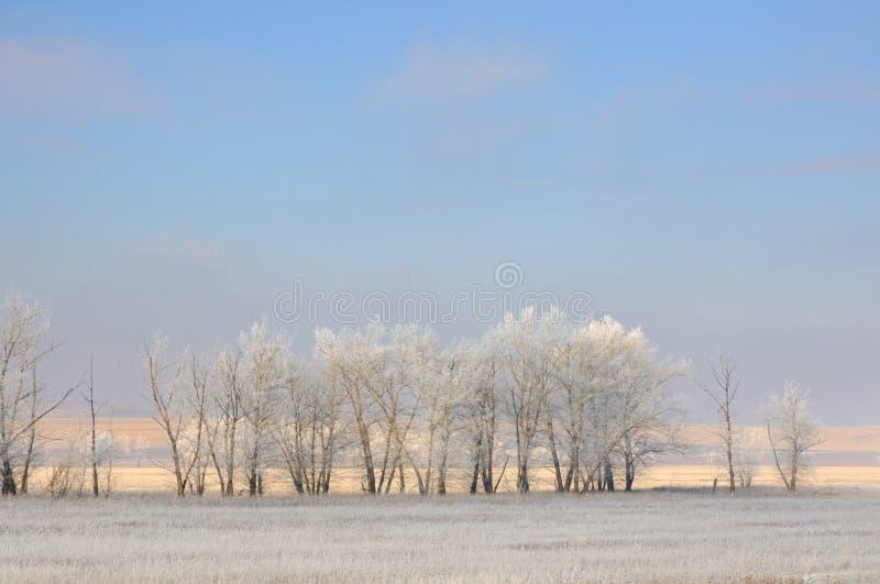 Vinterlandskap med djupfrysta kala träd på det rengjorda jordbruks- fältet som täckas med djupfryst torrt gult gräs under blå him royaltyfria foton