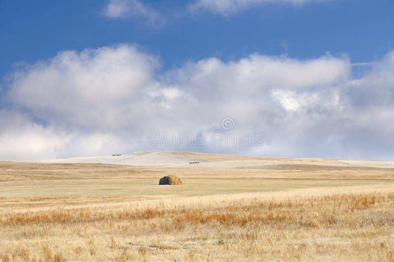 Vinterlandskap med ett rengjort jordbruks- fält med en sugrörbunt och första snö under mörkt - blå himmel med spektakulära moln royaltyfri fotografi