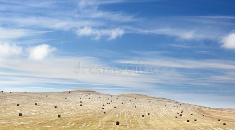 Vinterlandskap med ett rengjort jordbruks- fält med rullar för ett hö och första snö under mörkt - blå himmel med spektakulära mo royaltyfria foton