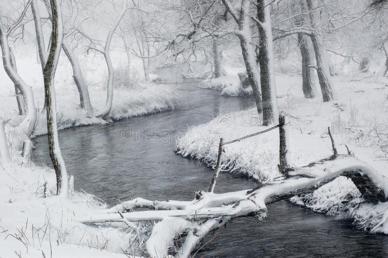 Vinterlandskap med häftiga snöstormen i skogen royaltyfri fotografi