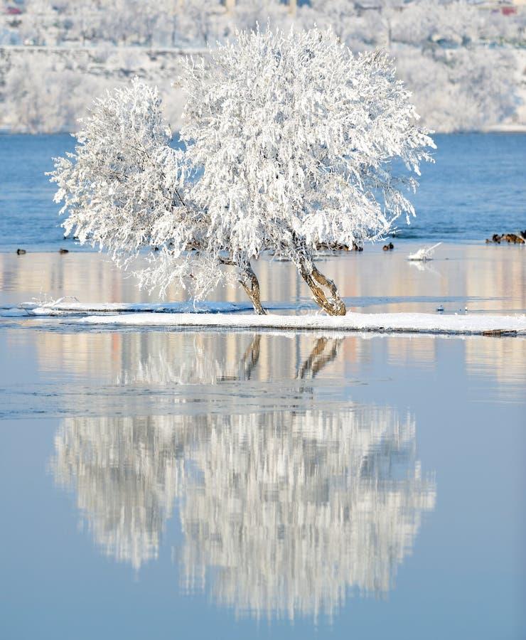 Vinterlandskap med reflexion i vattnet fotografering för bildbyråer