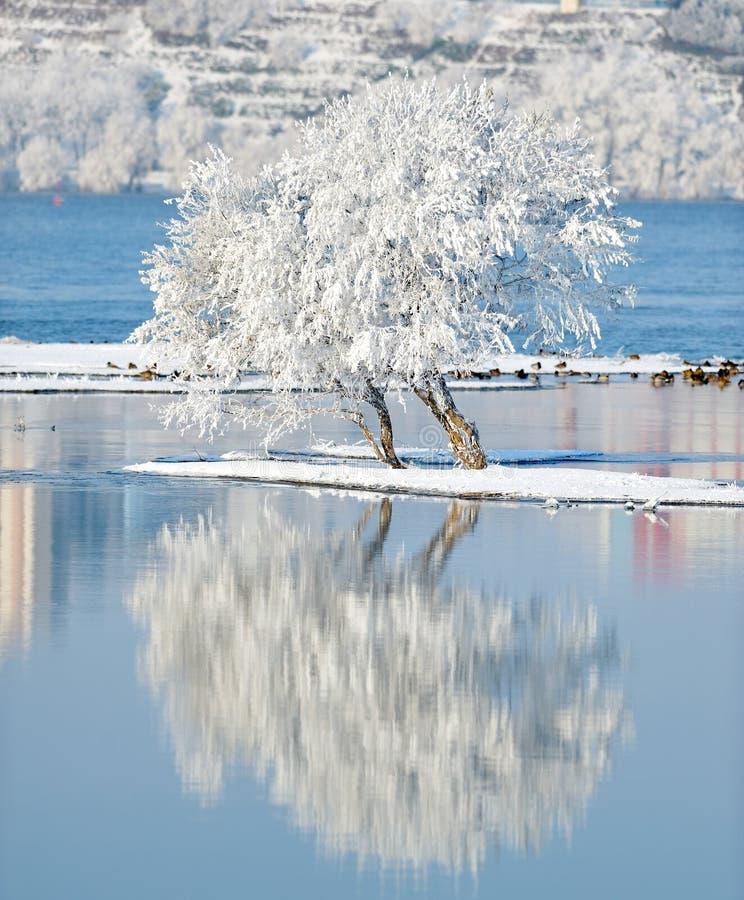 Vinterlandskap med reflexion i vattnet arkivfoto