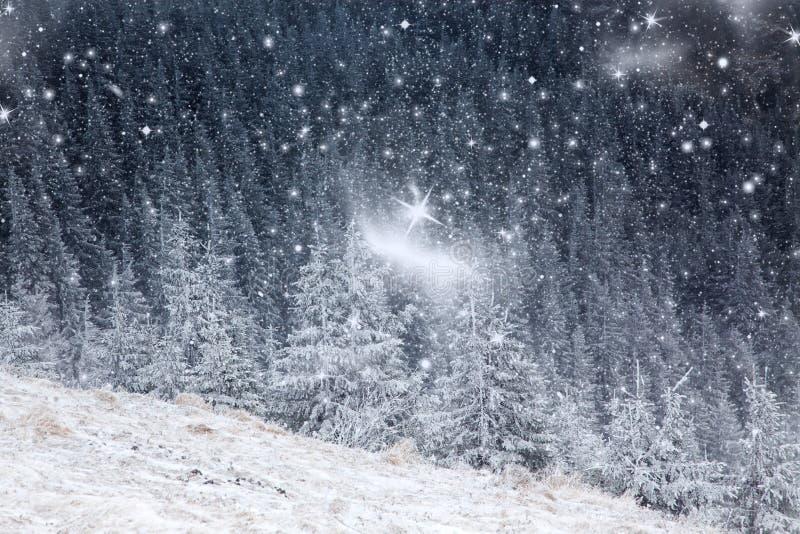 vinterlandskap med snöig granträd i bergen royaltyfri fotografi