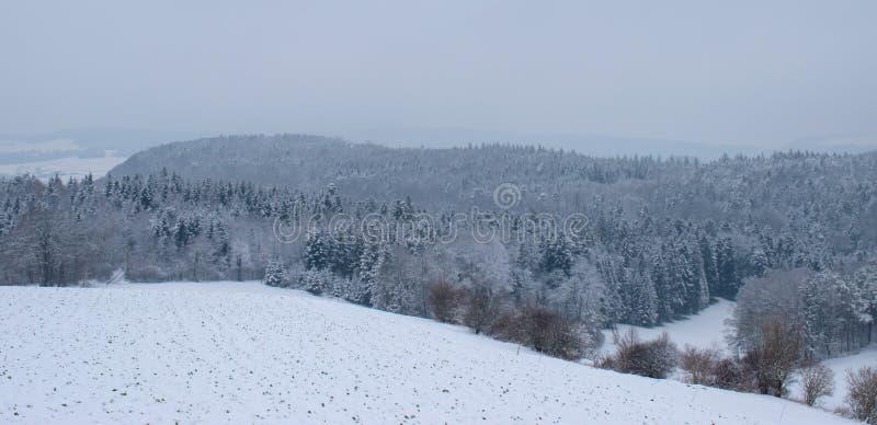 Vinterlandskap med snöig träd i Schweiz royaltyfri bild
