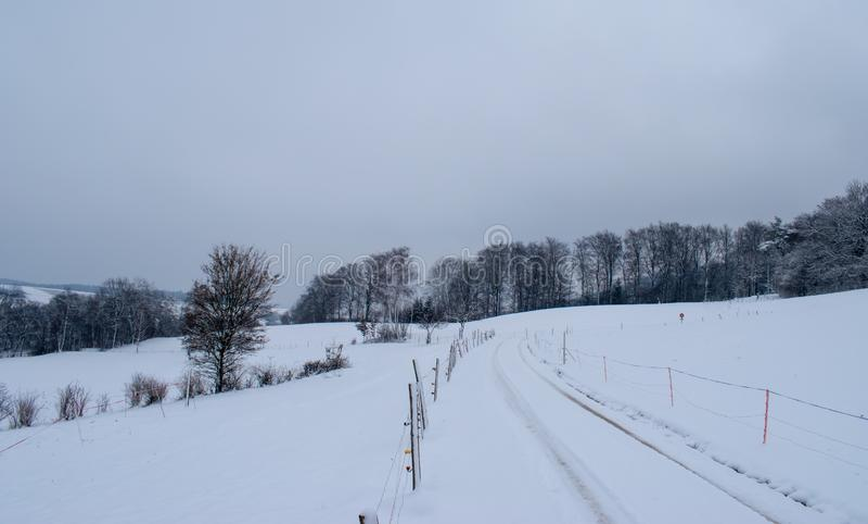 Vinterlandskap med snöig träd i Schweiz royaltyfri fotografi