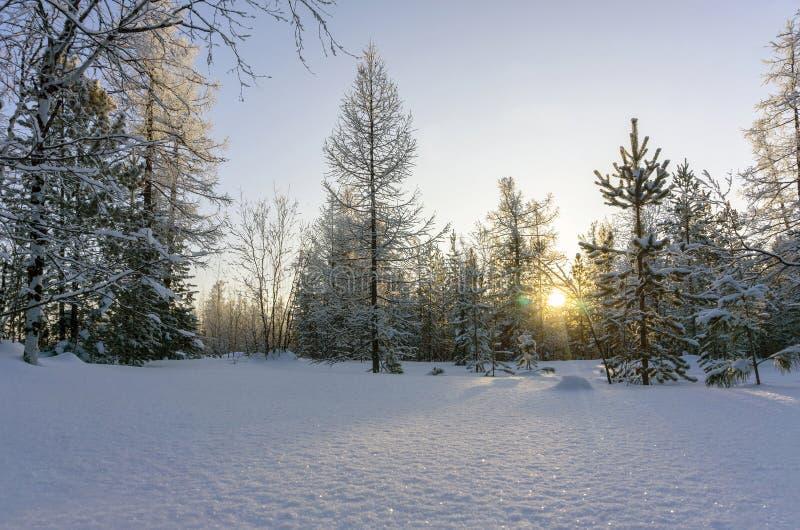 Vinterlandskap med snöig träd på solnedgången royaltyfri foto