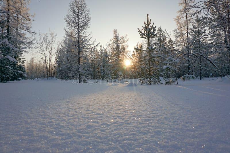 Vinterlandskap med snöig träd på solnedgången fotografering för bildbyråer